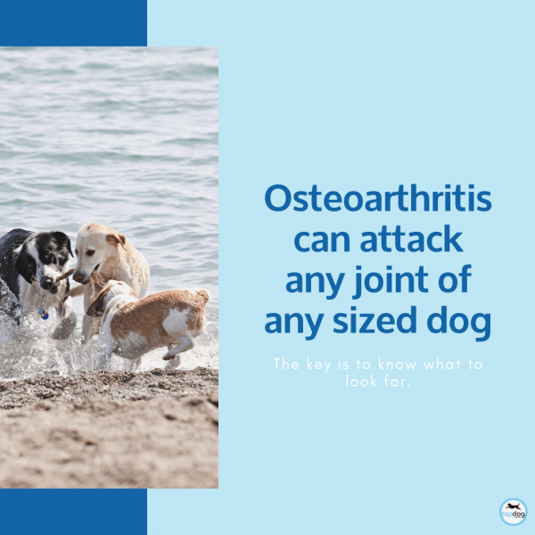 all dogs develop joint issues