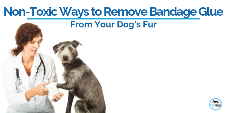Non-Toxic Ways to Remove Bandage Glue from Your Dog's Fur