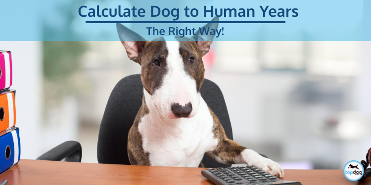 The Right Way to Calculate Dog to Human Years