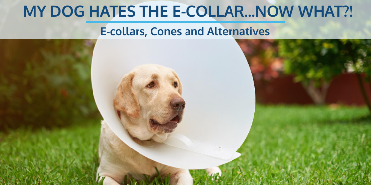 E-collars, Cones and Alternatives