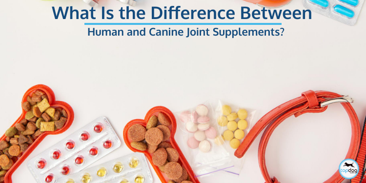 What Is the Difference Between Human and Canine Joint Supplements?