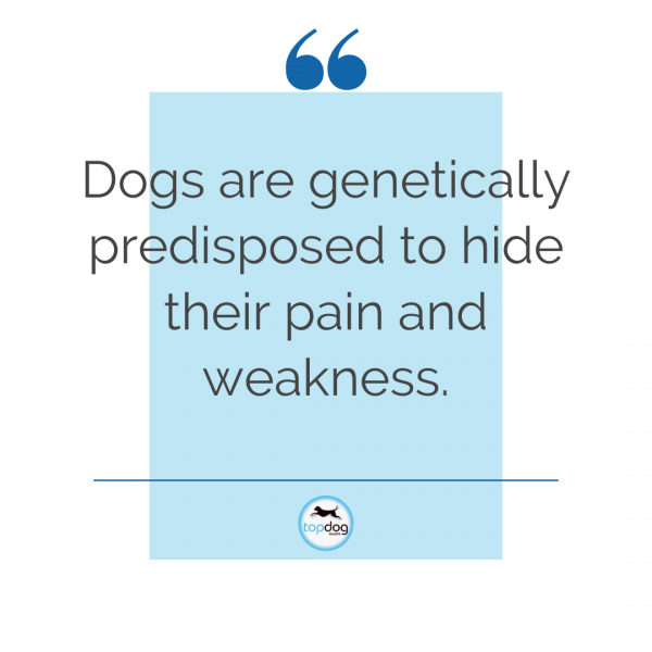 dogs hide pain naturally