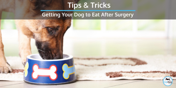 getting a dog to eat after surgery