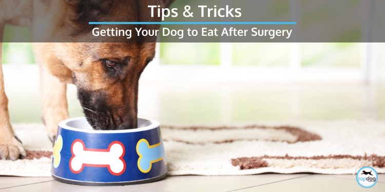 Getting Your Dog to Eat After Surgery