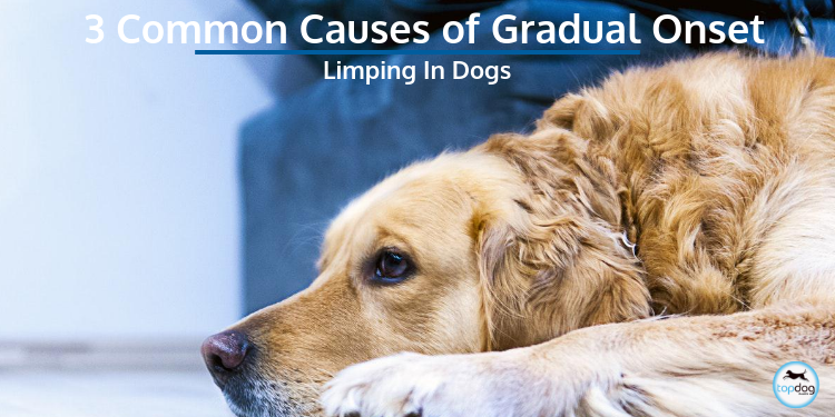 3 Common Causes of Gradual Onset Limping in Dogs