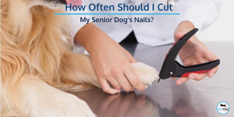 How Often Should I Cut My Senior Dog's Nails?