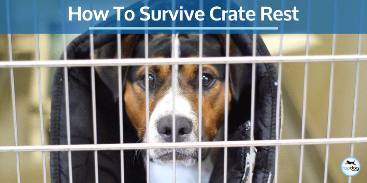 How To Survive Crate Rest