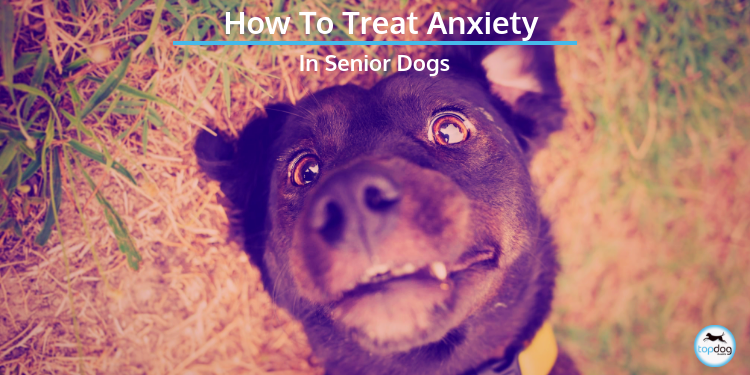 How to Treat Anxiety in Senior Dogs