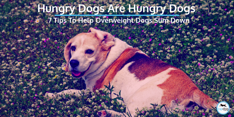 Hungry Dogs are Hungry Dogs