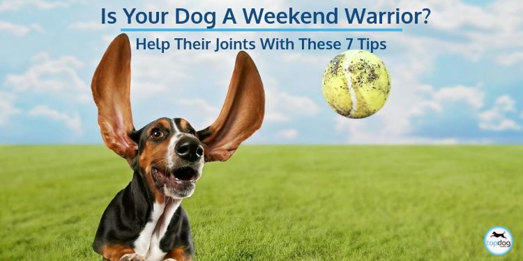 Is Your Dog a Weekend Warrior? Help Their Joints with These 7 Tips