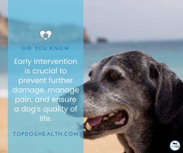 it is very important to manage dog pain
