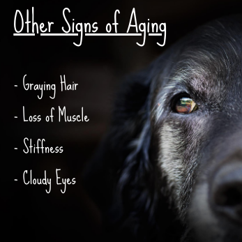 other signs of aging