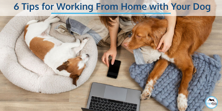 6 Tips for Working from Home with Your Dog