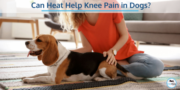 Can Heat Help Knee Pain in Dogs?