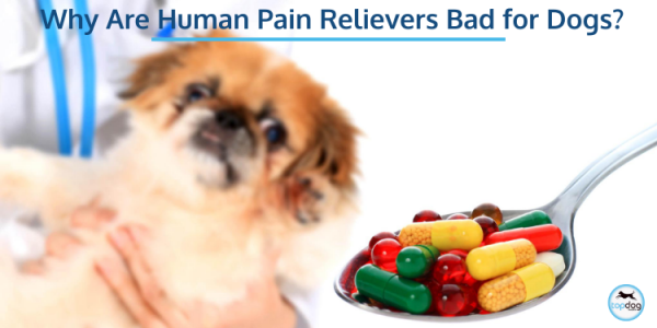 human pain medication is bad for dogs