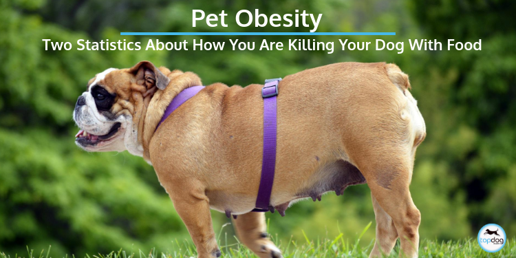 Pet Obesity: The Two Statistics About How You are Killing Your Dog With Food