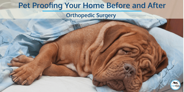 Pet Proofing Your Home Before and After Orthopedic Surgery
