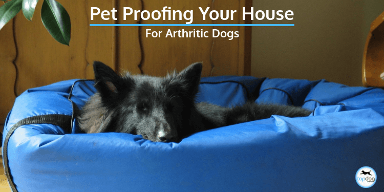 Pet Proofing Your House For Arthritic Dogs
