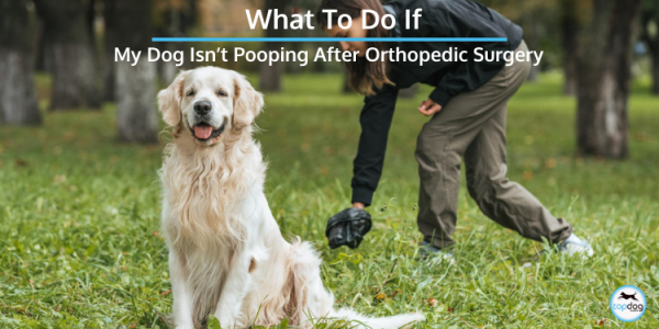 when should my dog poop after surgery
