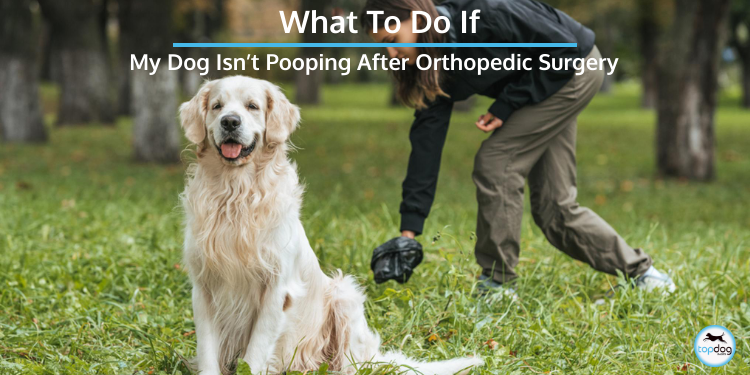 My Dog Isn't Pooping After Orthopedic Surgery