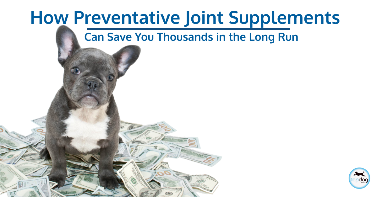 How Preventative Joint Supplements for Dogs Saves You Thousands
