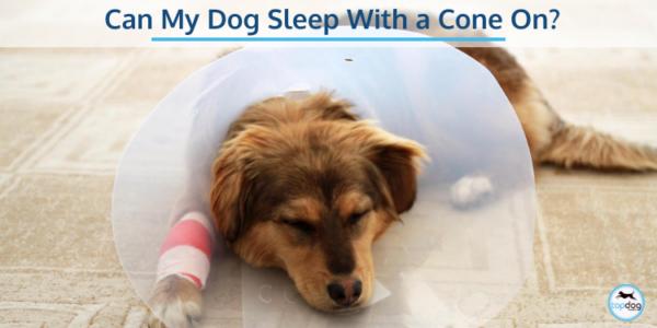 can my dog sleep with a cone