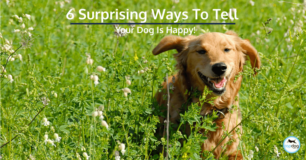 6 Surprising Ways to Tell Your Dog Is Happy