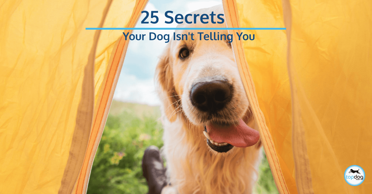 25 Secrets Your Dog Isn't Telling You