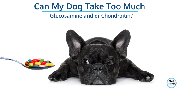 Glucosamine and or Chondroitin – Can My Dog Take Too Much?