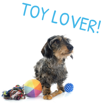 dog toy lover