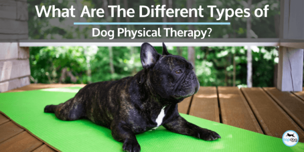 types of dog physical therapy