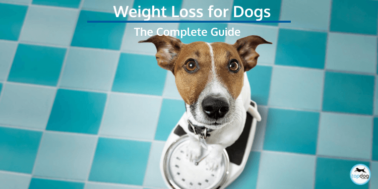 The Complete Guide to Weight Loss for Dogs